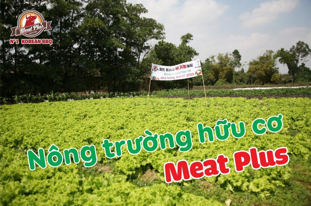 Nông trường hữu cơ ở Meat Plus được xây dựng để sản xuất riêng các loại rau ăn kèm chất lượng