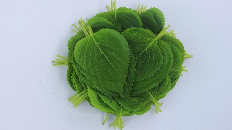 Khi tìm hiểu lá kê nhíp mua ở đâu Hà Nội, bạn có thể biết thêm về lợi ích của loại rau này với sức khỏe