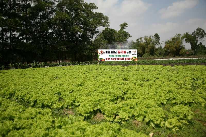 rau ăn kèm đều là rau sạch hữu cơ trồng tại nông trường của Meat Plus.